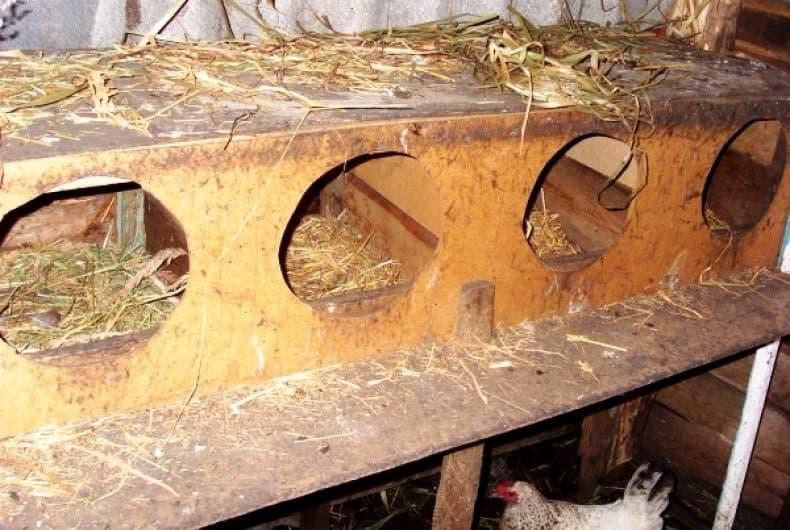 фото как сделать гнезда для кур оставаться
