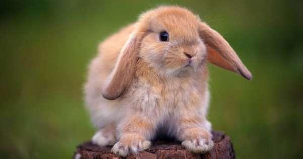 Кролик-мальчик