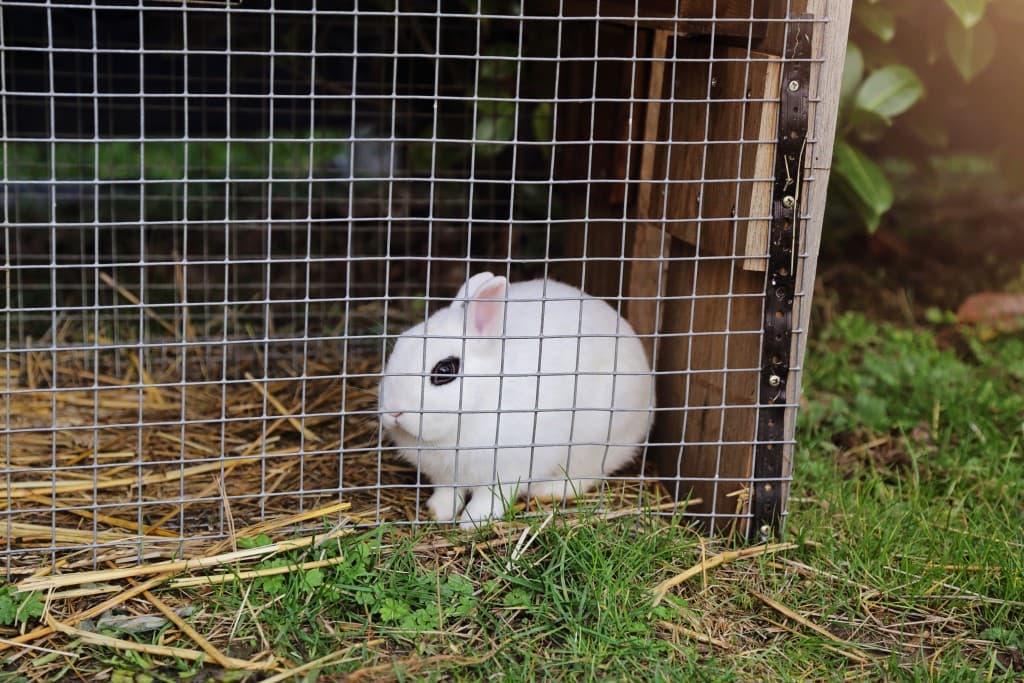 Белый кролик в клетке