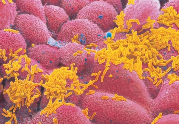 Заболевания индюков
