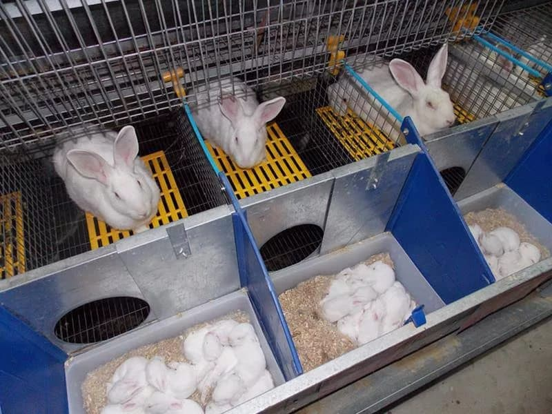 Маточники для кроликов