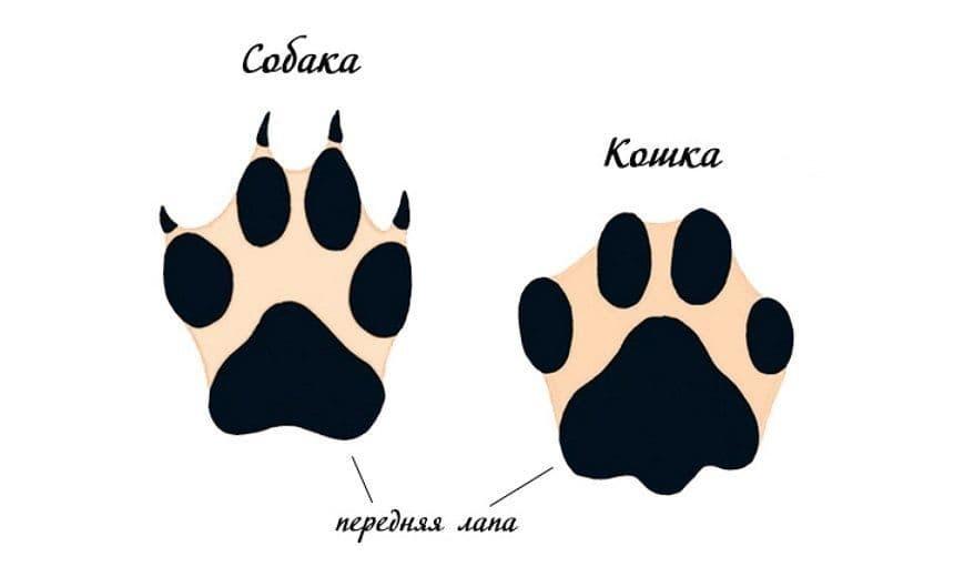 Следы собаки и кошки