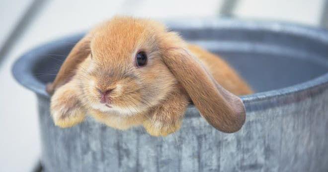 Кролик после купания