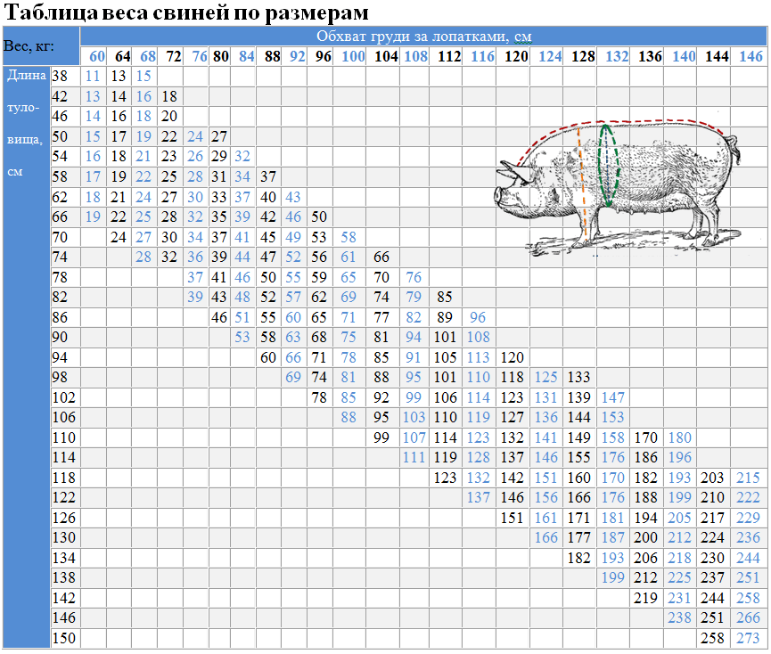 Таблица веса свиней по размерам