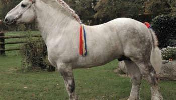 Лошадь Першерон