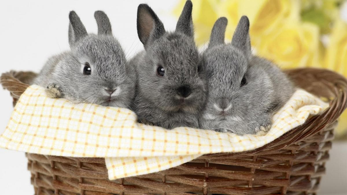 различные красивый кролик фото пообещать семь лет