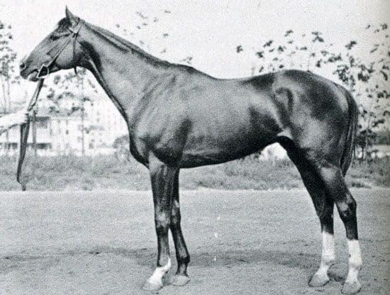 Будённовские лошади