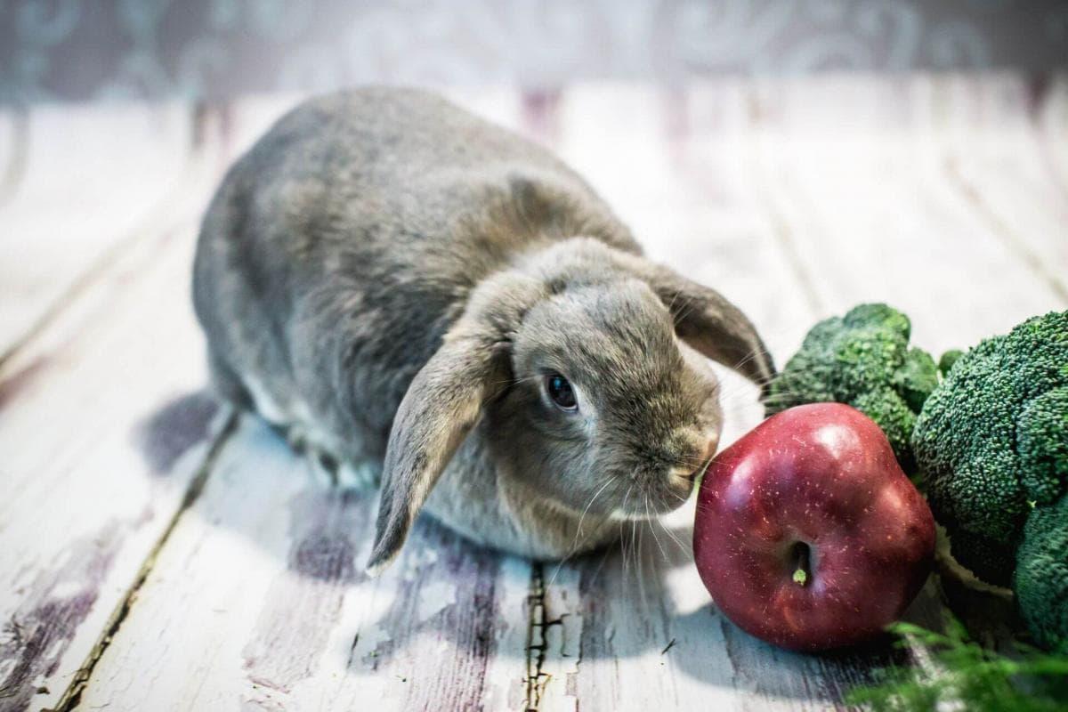 Кролик и яблоко