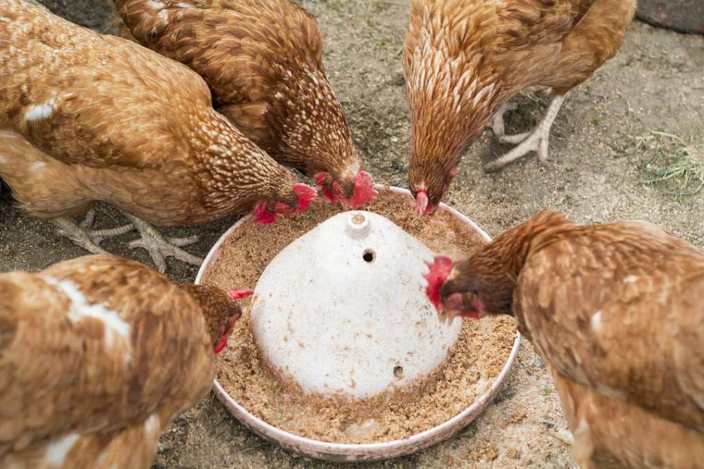Питание для кур