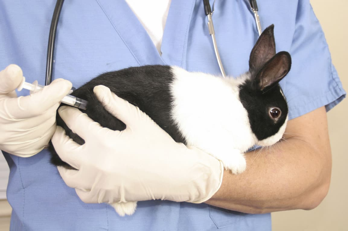 Ассоциированная вакцина от миксоматоза и ВГБК для кроликов — инструкция по применению