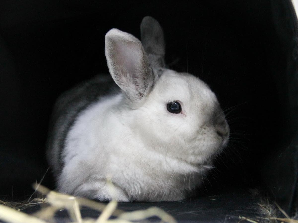 Молодой кролик