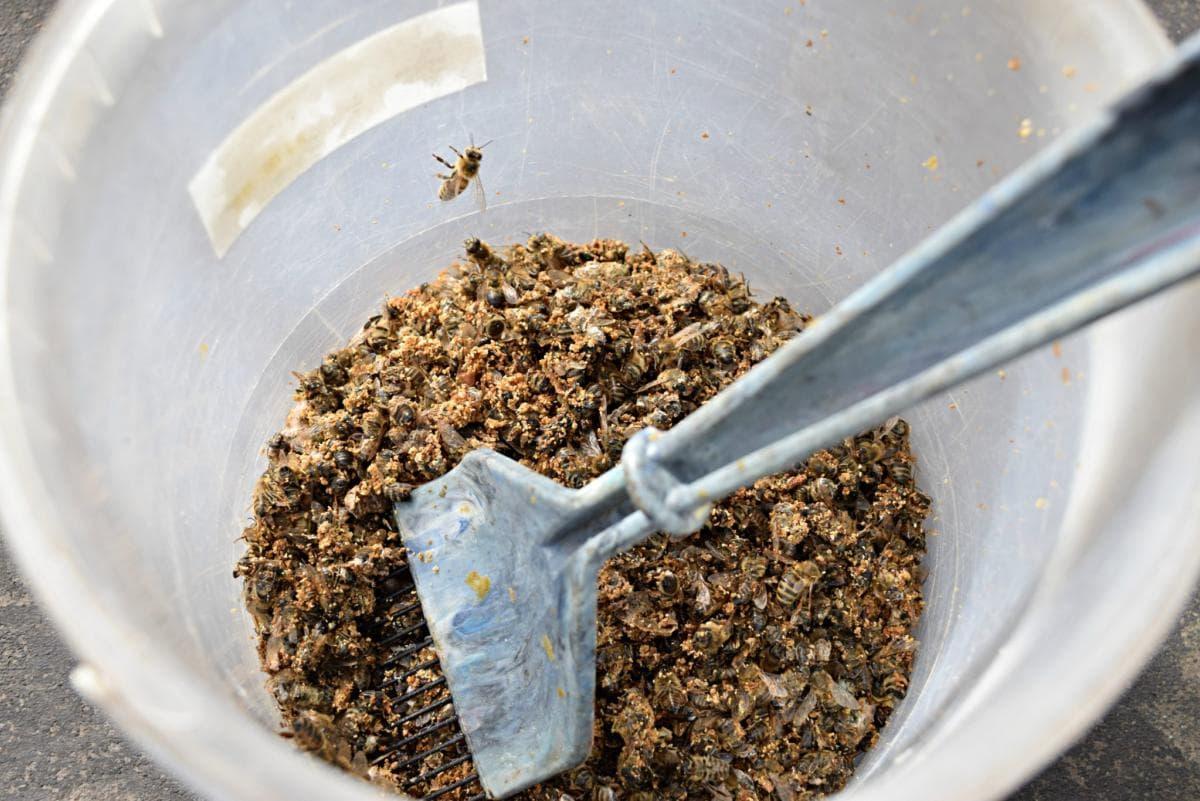 Рецепт из пчелиного подмора