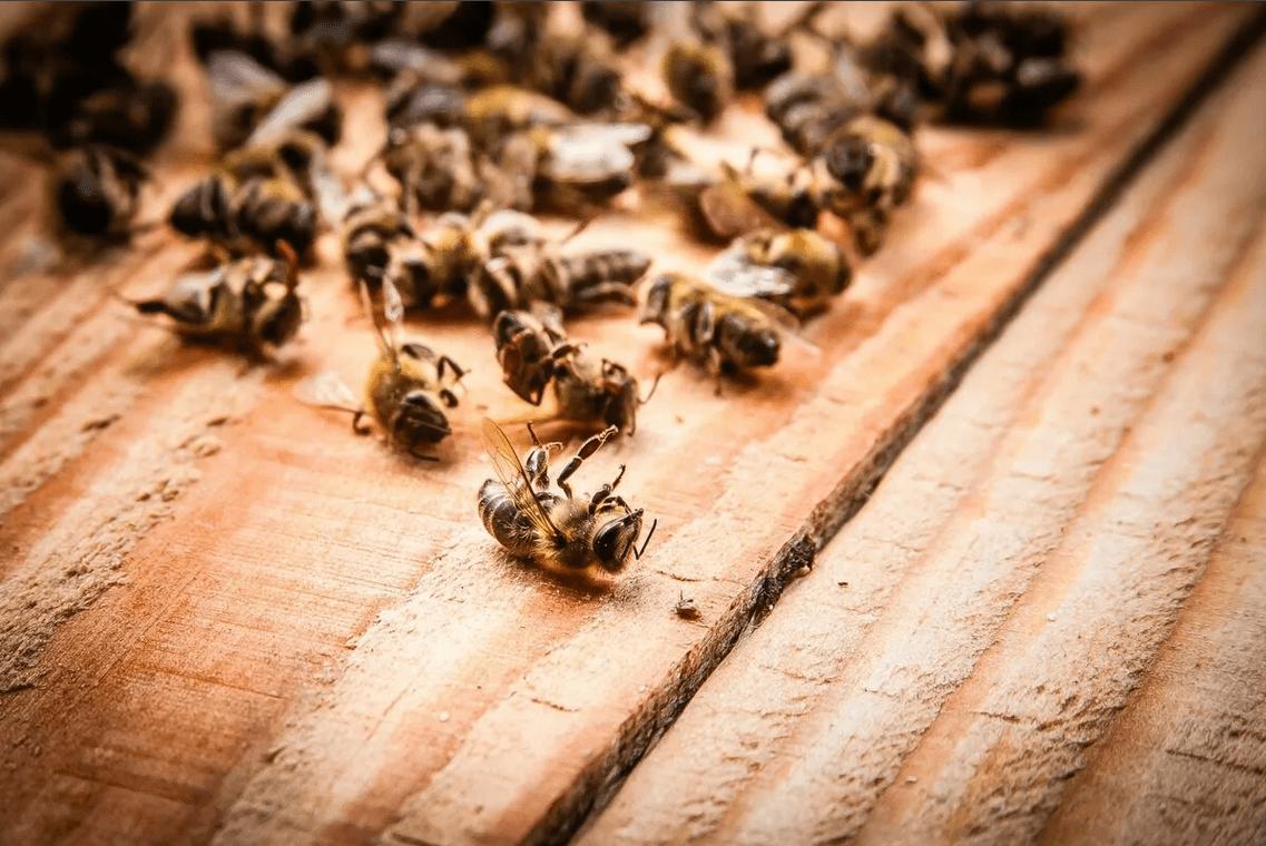 Мор пчел