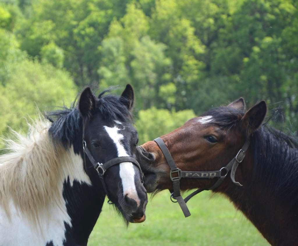 Счастливые лошади