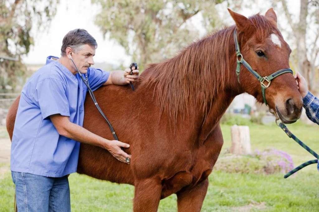 Лошадь у ветеринара