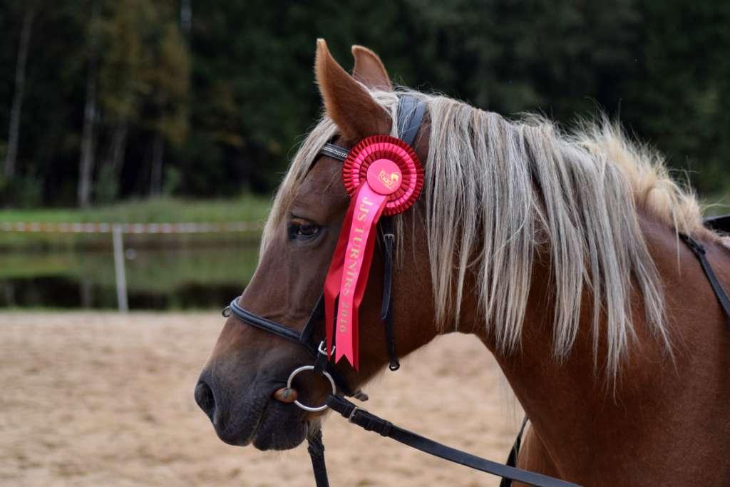 Лошадь с лентой