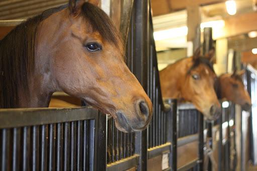 Лошадь в конюшне