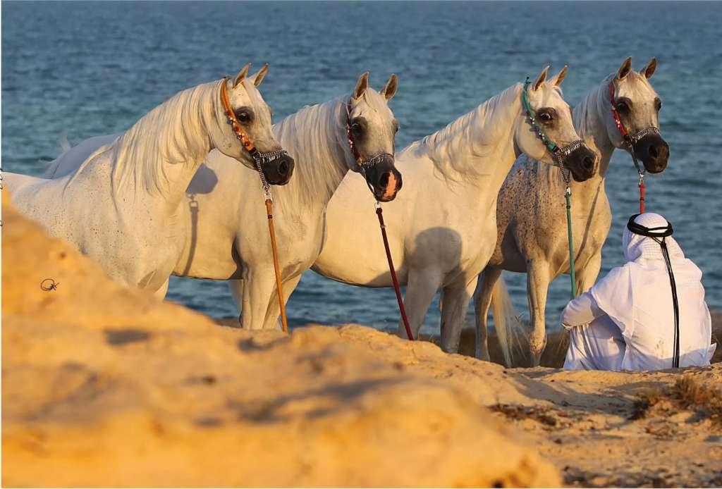 Арабские кони