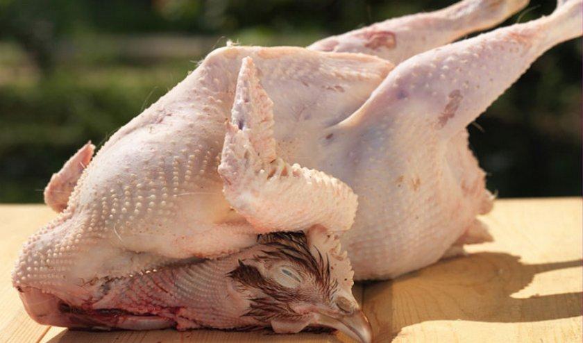 Как правильно ощипывать кур?