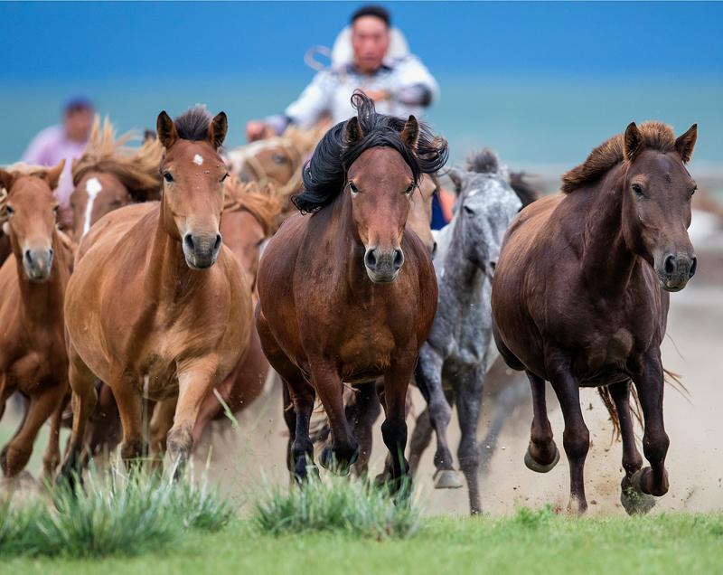 Кони в Монголии