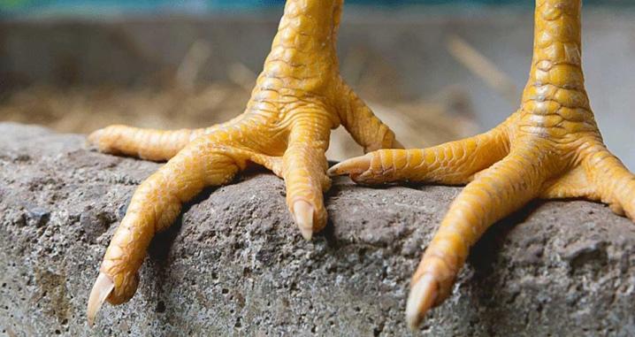 Куриные ножки