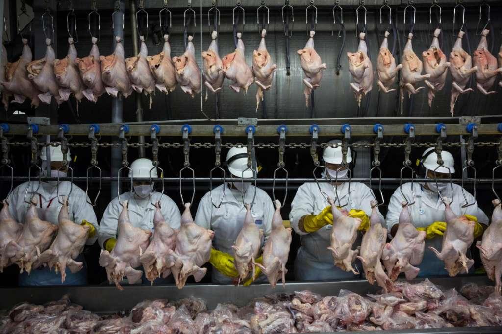 Ощипывание кур на птицефабрике