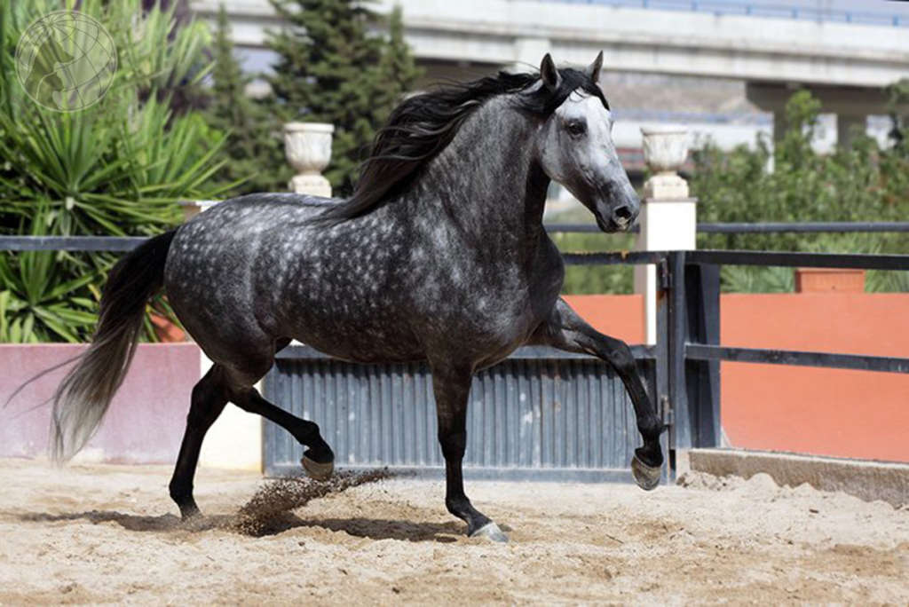 Андалузская