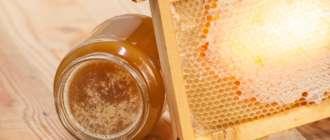 Забродивший мед