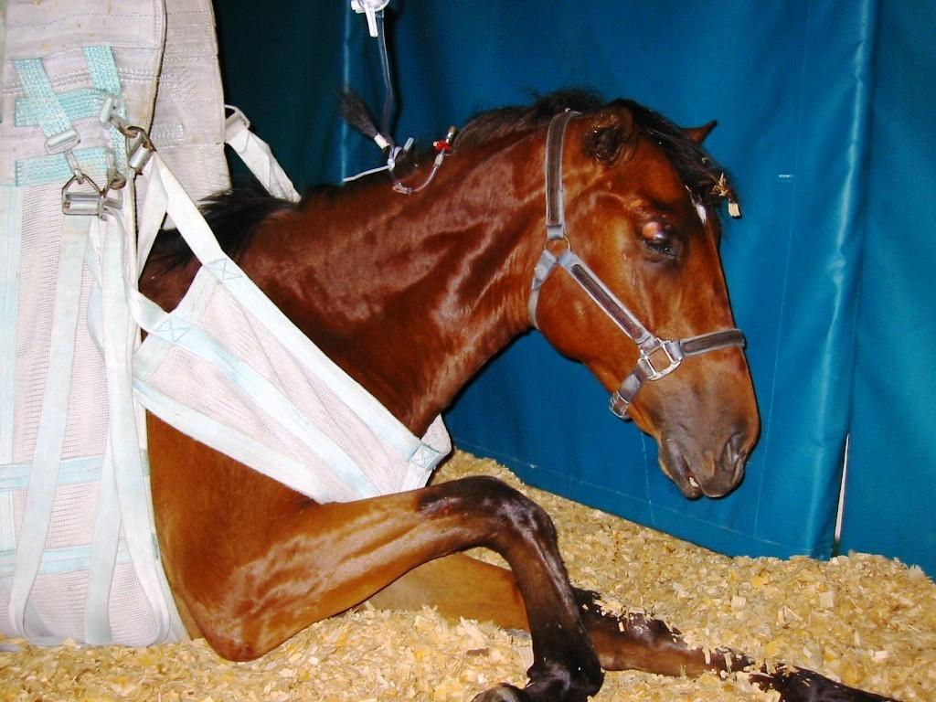 Энцефаломиелит лошадей