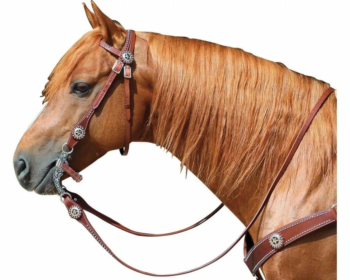 Уздечка у лошади