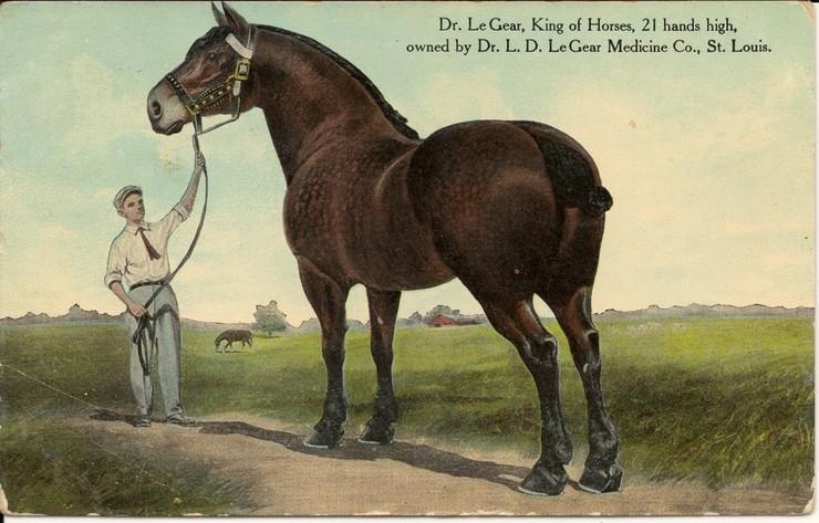 Доктор Ле Жер