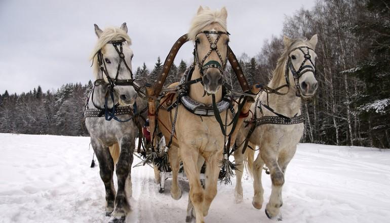 Русские лошади