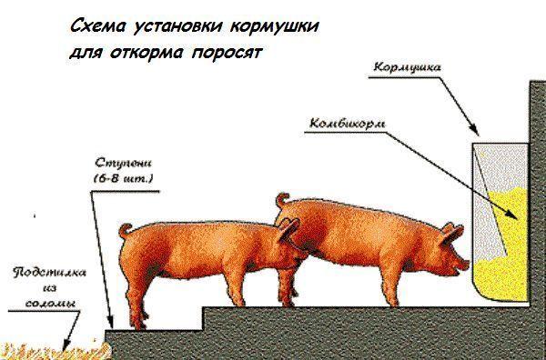 Схема установки кормушки для кормления свиней