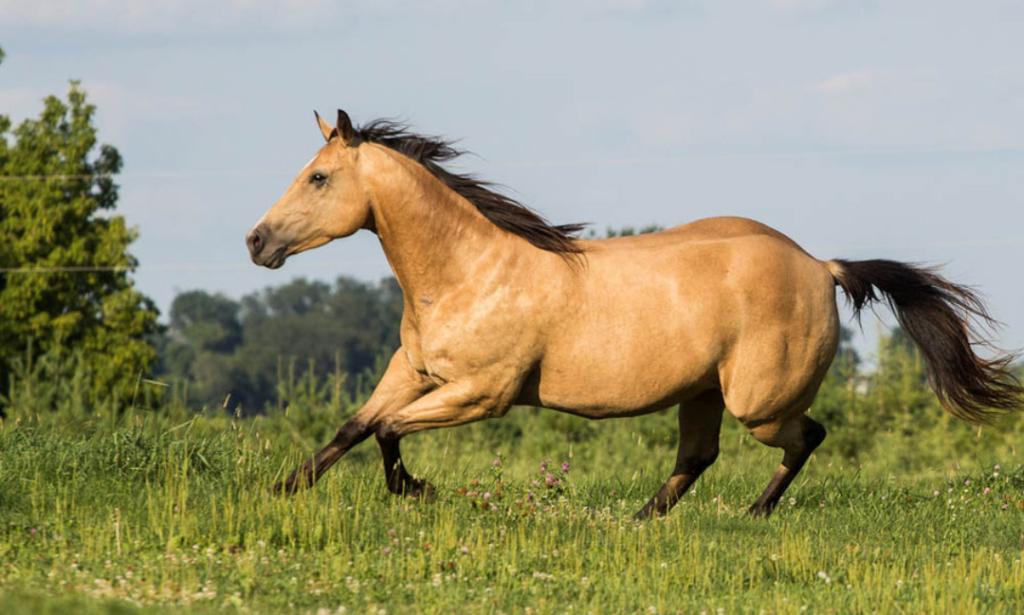Нарымская лошадь