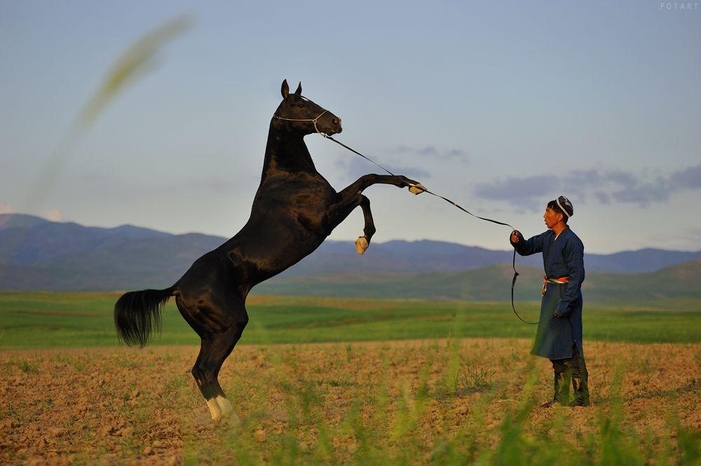 Узбекская лошадь иноходец