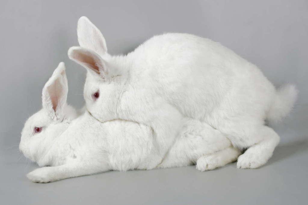 Кролики размножаются