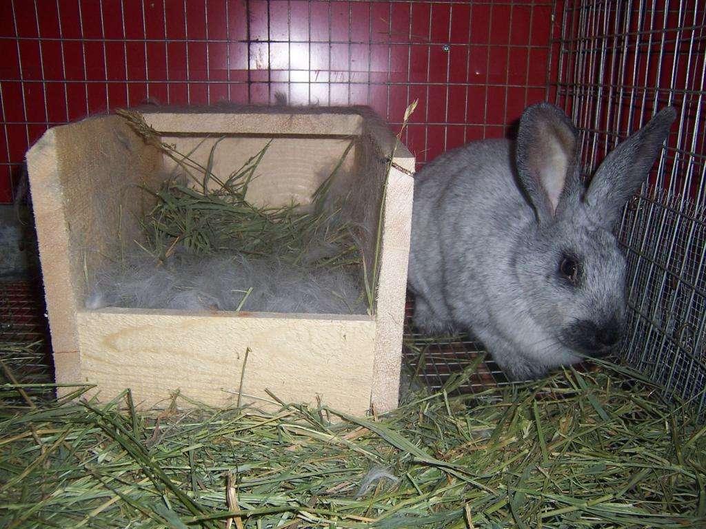 Гнездо для кроликов