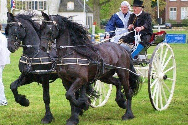 Карета с Фризской лошадью