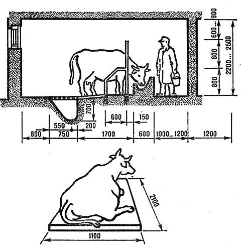 Как сделать стойло для коровы? Пошаговая инструкция и обустройство