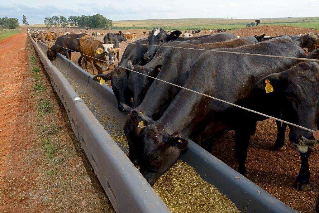 Выгульный двор для коров