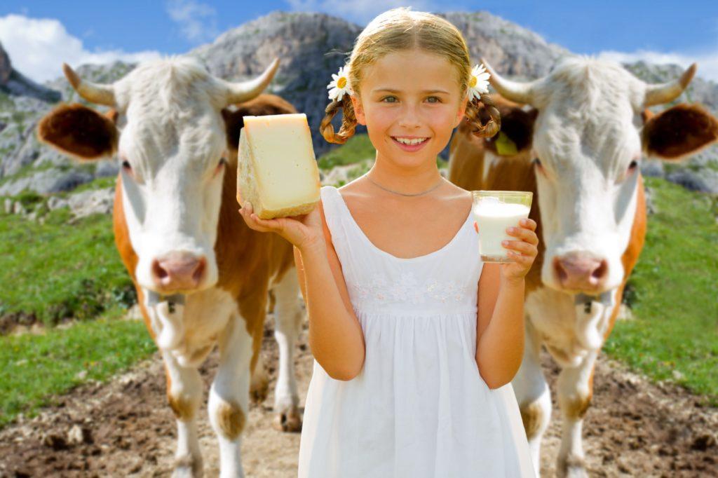 Почему у коровы соленое молоко
