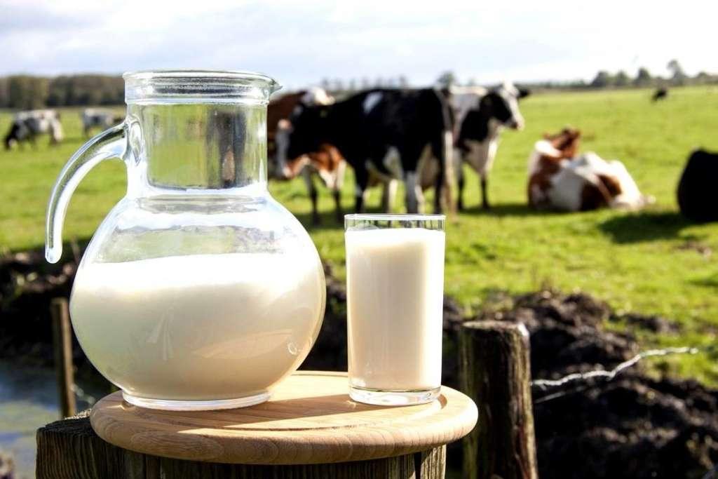 Молоко и коровы
