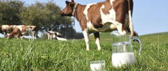 Жирность коровьего молока