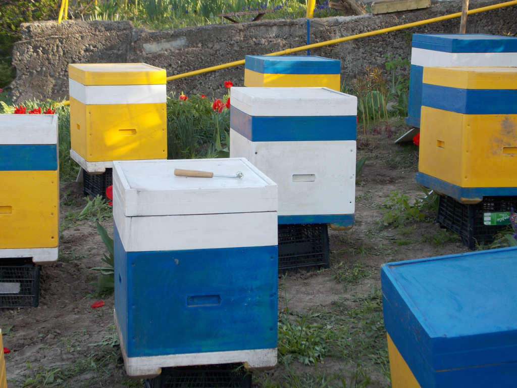 Какие бывают пчелиные улья и как их сделать своими руками?