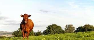 Красногорбатовская порода коров