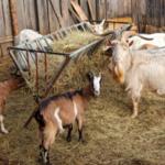 Сарай для коз