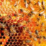 Пчелы делают мед