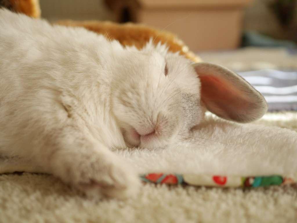 Почему дохнут кролики