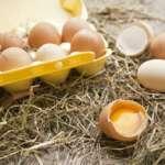 Срок годности куриных яиц