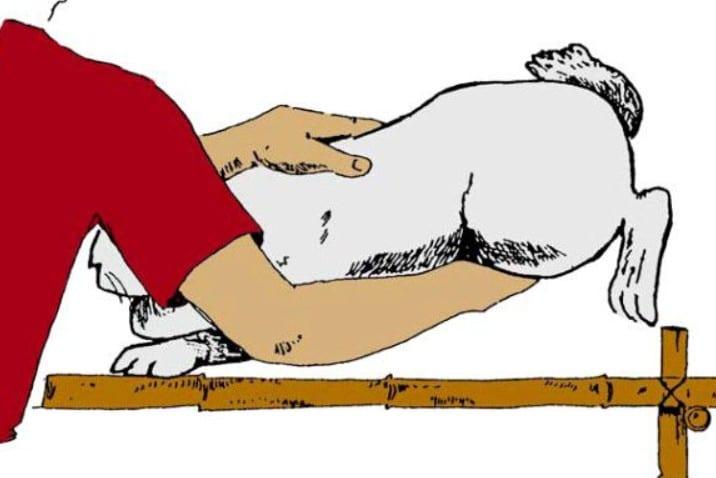 Пальпация кролика